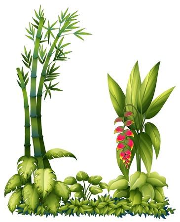 Illustration der grünen Pflanzen auf weißem Hintergrund Illustration