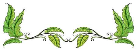 elongated: Illustration of a leafy border on a white background Illustration
