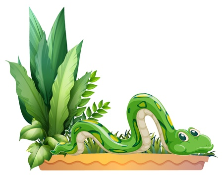 Illustration of a green snake on a white background Stock Vector - 17443631