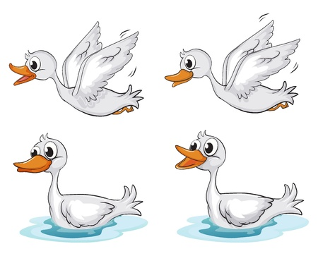Illustration of four ducks on a white background