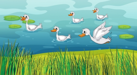 Illustration of ducks looking for foods Stock Vector - 17442898