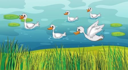 wet flies: Illustration of ducks looking for foods