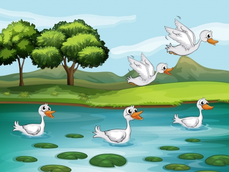 Illustration of ducks and water in a beautiful nature Vector