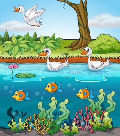pond water: Illustration of duck and fishes
