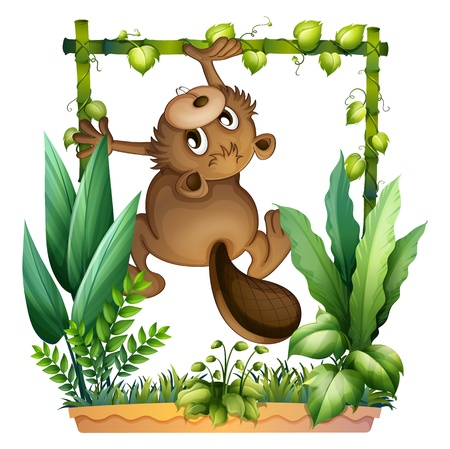 Illustration of a beaver climbing on a white background Vector