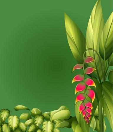 elliptic: Illustration of plants with elliptic leaves on a green background Illustration
