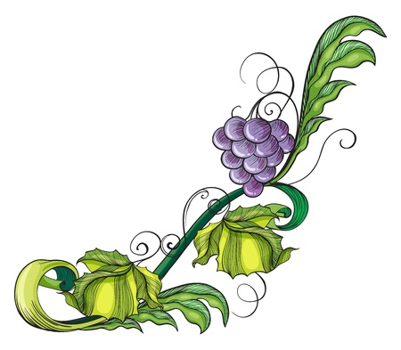 picure: Illustration of a grape vine border on a white background
