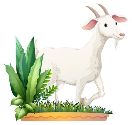 goats: Illustration of a white goat on a white background Illustration