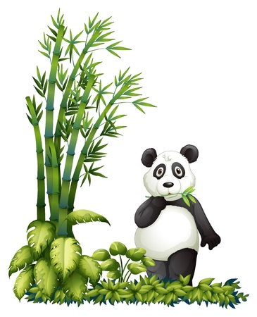 Illsutration of a panda eating on a white background Vector