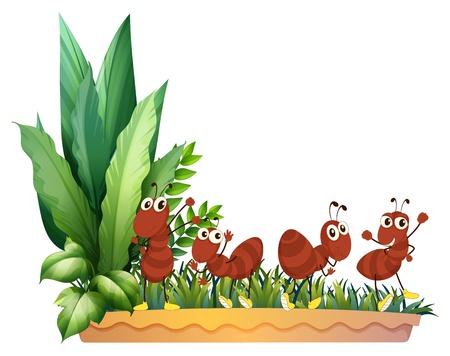 ant leaf: Ilustración de los cuatro hormigas sobre un fondo blanco Vectores