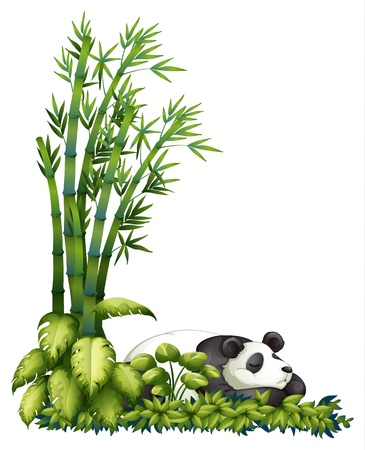 Illustration of a sleeping panda on a white background Vector
