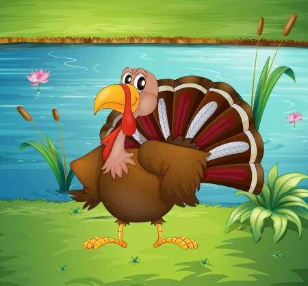 caruncle: Illustration of a turkey near the pond