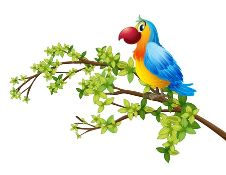 Illustration of a colorful parrot on a white background Vector