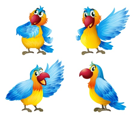 Illustration of four colorful parrots on a white background  Illustration
