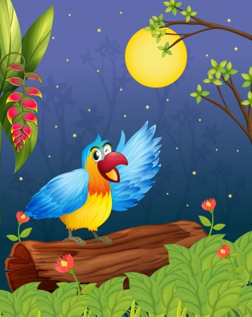 tropical bird: Illustration of a colorful parrot in a bright evening Illustration