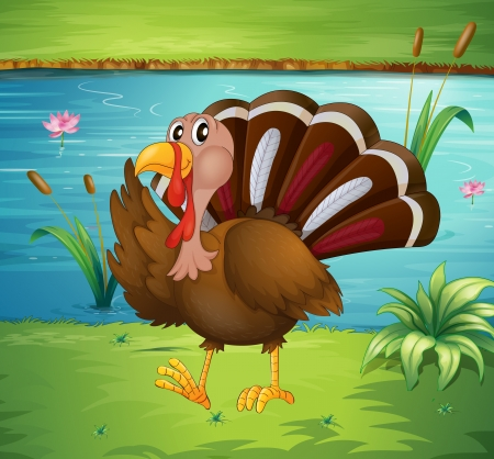 caruncle: Illustration of a turkey walking near the river Illustration