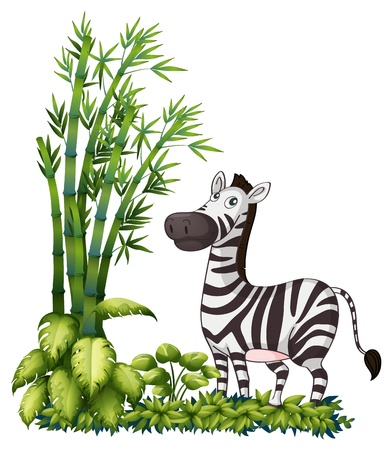 Illustration of a zebra near the bamboo grass on a white background Stock Vector - 17891927