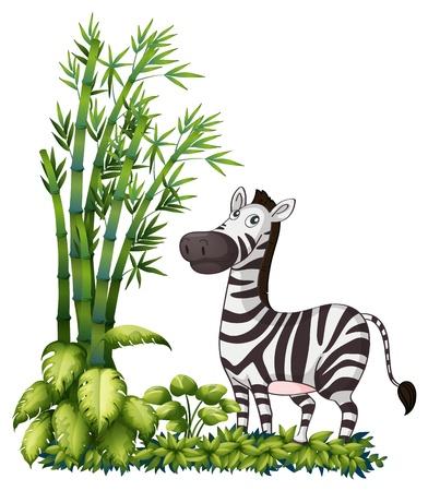 nostrils: Illustration of a zebra near the bamboo grass on a white background Illustration