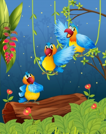 jungle vines: Illustration of three colorful parrots