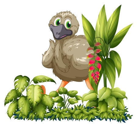 Illustration of an emu hiding in the garden on a white background Stock Vector - 17892437