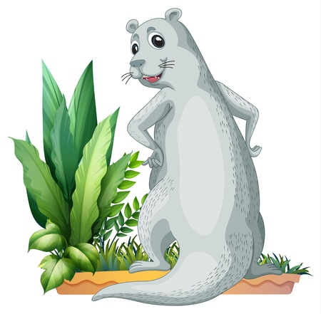 sea otter: Illustration of an otter on a white background