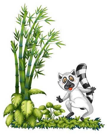 Illustration of a racoon near the bamboo plant on a white background Vector