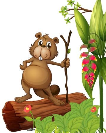 castor: Ilustración de un castor por encima de un tronco en un fondo blanco