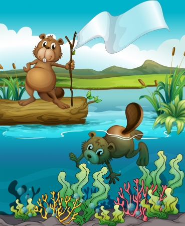 beavers: Illustration of beavers in the river