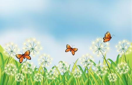 flower fields: Illustration of the orange butterflies in the garden