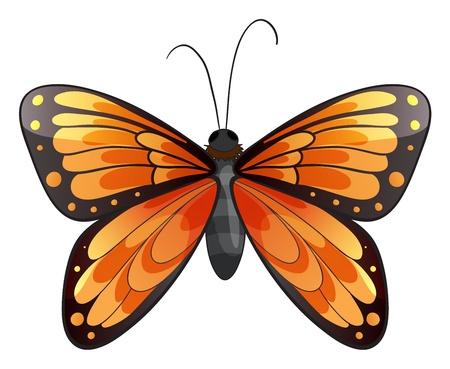 papillon dessin: Illustration d'un papillon sur un fond blanc