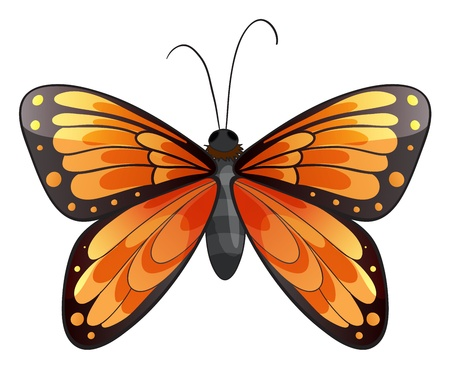 butterfly tail: Illustration of a butterfly on a white background