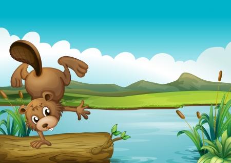 nutria caricatura: Ilustración de un castor al lado de un río Vectores