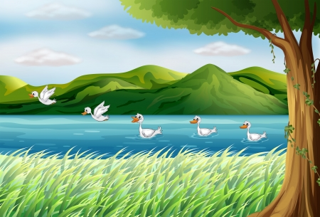 pict: Illustration of five ducks in the river