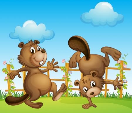 castor: Ilustración de los castores jugando en el jardín