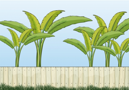 drawing safety: Illustration of banana plants and a fence