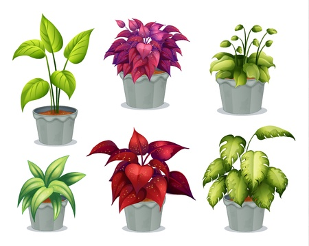 potting soil: Illustration of six non-flowering plants on a white background
