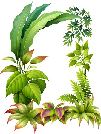 petiole: Illustration of leafy plants on a white background