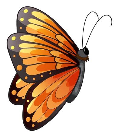papillon dessin: Illustration d'un papillon coloré sur un fond blanc Illustration