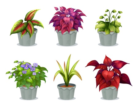 Illustration of six different plants on a white background Stock Vector - 17895458