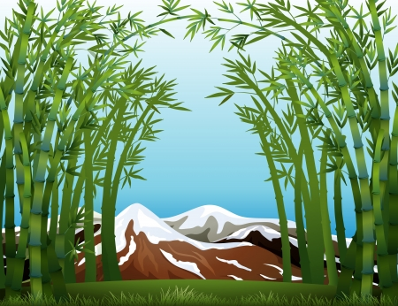 bamboo forest: Illustration of a bamboo forest and the snowy mountain