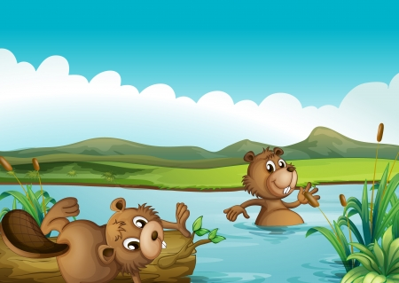 beavers: Illustration of beavers playing in the river