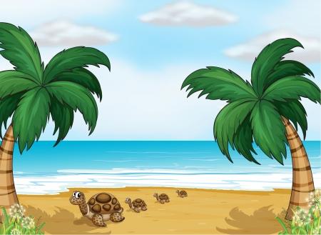 green sea turtle: Illustration of turtles at the seashore