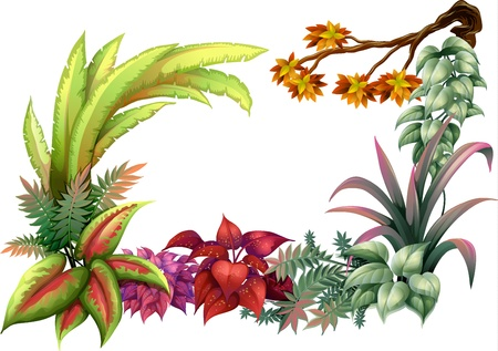 exotic plant: Illustration of leafy plants and a branch of a tree on a white background Illustration