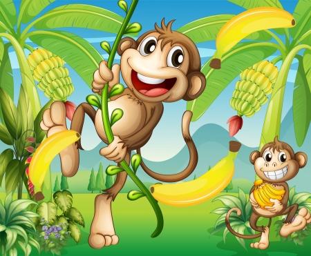 banaan cartoon: Illustratie van twee apen in de buurt van de bananenplant Stock Illustratie