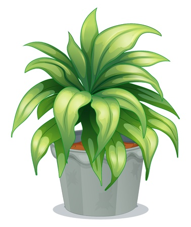 plant pot: Illustration of a leafy plant on a white background