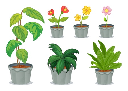 Illustration of six pots with plants on a white background Vector