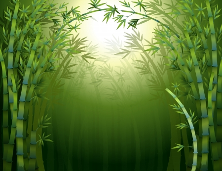 forest cartoon: Illustration of a bamboo rainforest