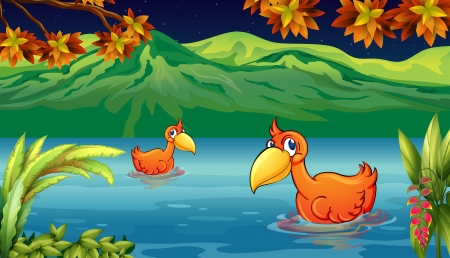 Illustration of two ducks swiming in the river Vector