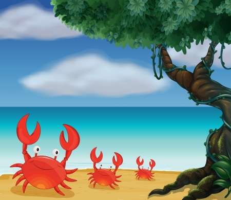 seafoods: Illustration of the three crabs at the seashore Illustration