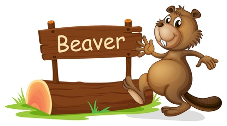 Illustration of a beaver beside a wooden signage on a white background Vector